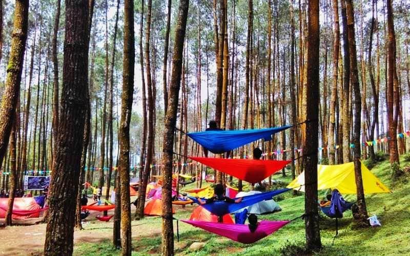 hutan pinus kragilan