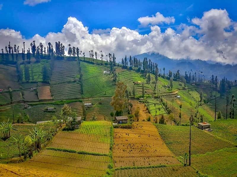 Desa Ngadas dan Ngadisari