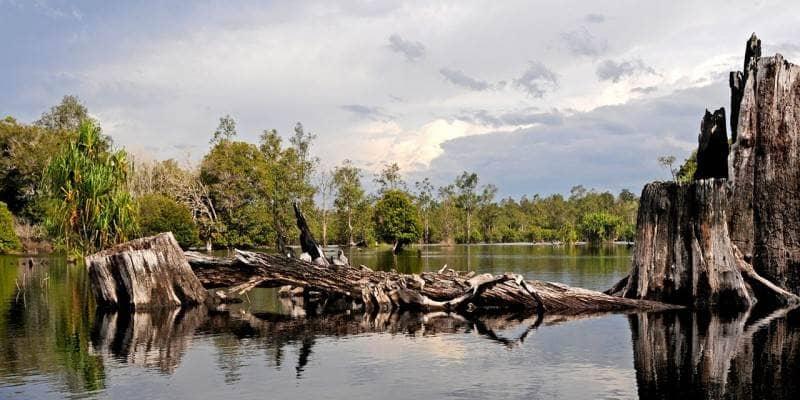 Wisata Palangkaraya taman nasional sebangau