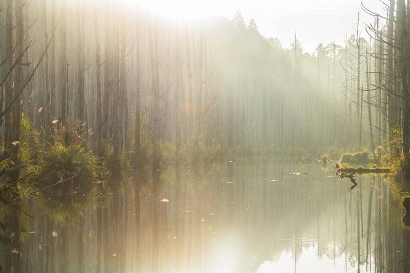 Hutan Shuiyang