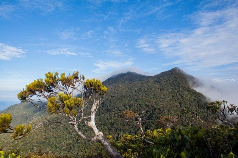 rekomendasi jalur pendakian di Malaysia