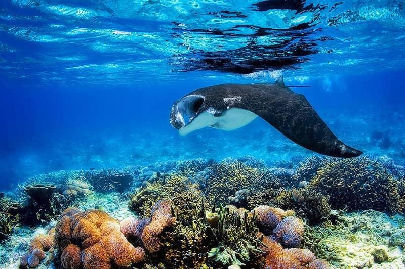 7 Spot Menyelam Terbaik di Raja Ampat Dengan Keindahan Bawah laut