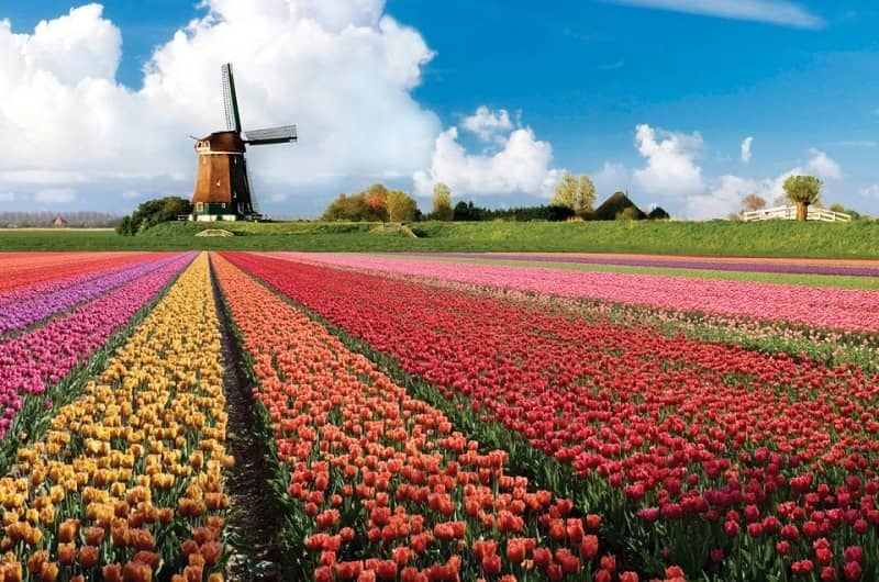 Taman Keukenhof - Belanda