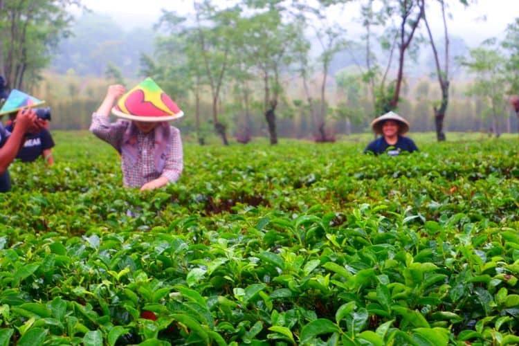 7 Agrowisata di Malang Bikin Seger Mata