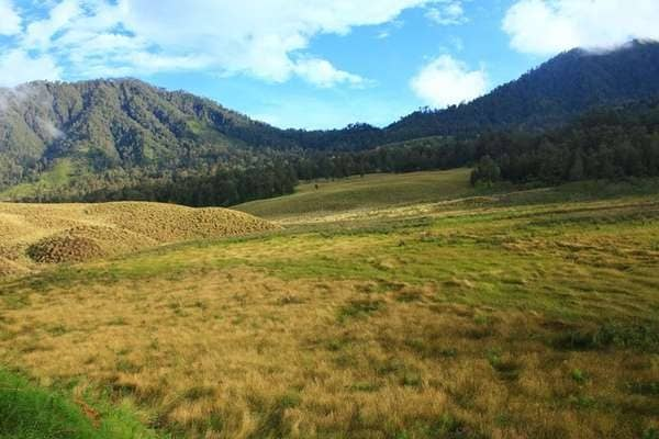 Padang Savana Cikasur  Gunung Argopuro