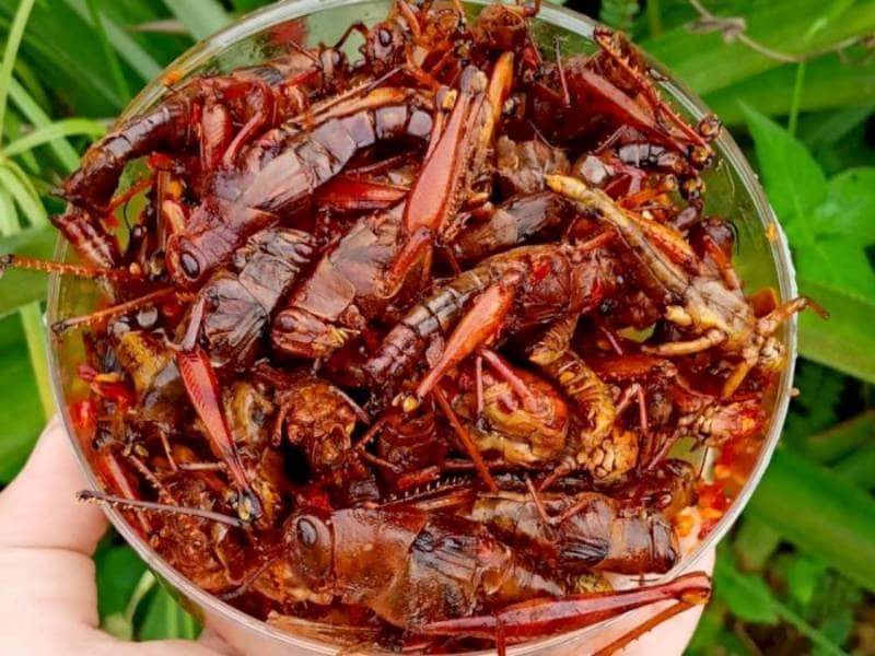 Fried Grasshopper
