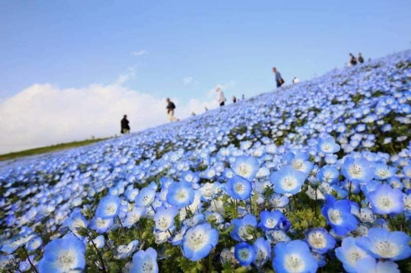 10 Taman Terindah di Jepang