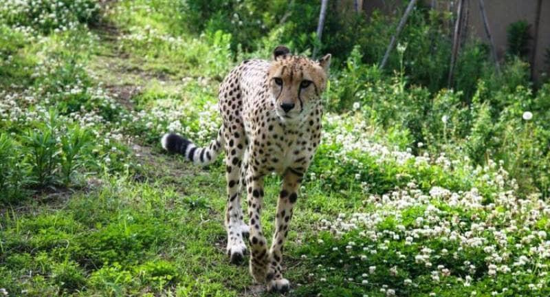 Kebun Binatang Yokohama